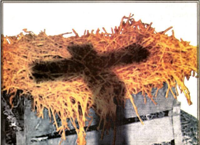 cross-shadow-on-manger-jesus-16016320-698-507