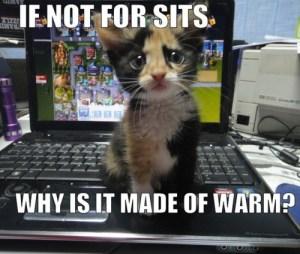 kitten-warm-computer