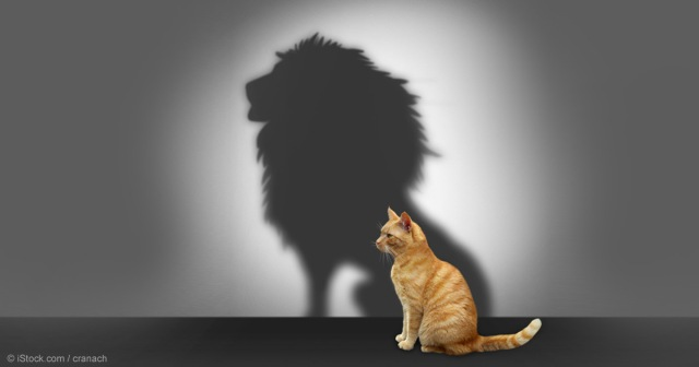 cat-lion-shadow-fb